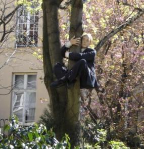 Man up a tree